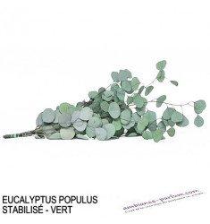 EUCALYPTUS POPULUS STABILISÉ - VERT